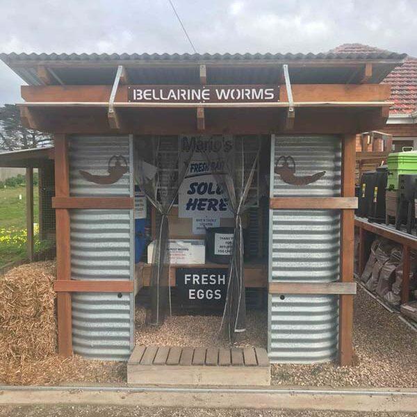 bellarine-worms-2020-1
